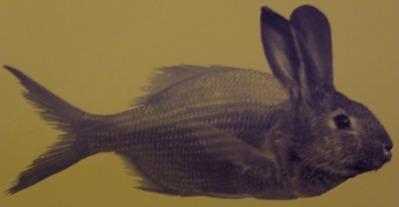 source : http://atkillarneys.blogspot.com/2011/04/mefiez-vous-des-poissons.html